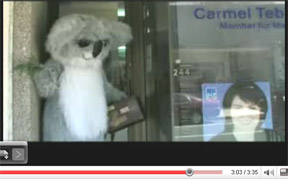 The South East Koala comes to visit Carmel in Marrickville